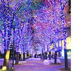 絶対見たい☆横浜のイルミネーション
